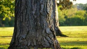 Duży drzewo w parkowej tło trawie Zdjęcie Stock