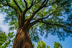 Duży drzewo w parku, Szanghaj, Chiny zdjęcia stock