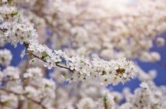 duży gałęziasty drzewny biel fotografia royalty free