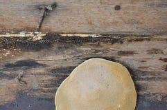 Duży grzyb na starej drewnianej desce zdjęcie stock
