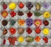 Duży Jaskrawy jesieni Wciąż życie w kwadratowym pudełku Chodzić przez th Zdjęcia Royalty Free