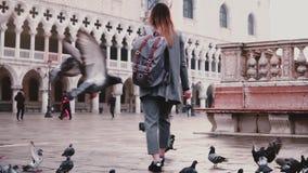 Duży kierdel gołębie podąża szczęśliwego żeńskiego turysty na zadziwiać San Marco miasta kwadrat w Wenecja Włochy zwolnionym temp zbiory wideo