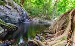 Duży Korzeniowy drzewo na małej siklawie w porze suchej Fotografia Royalty Free
