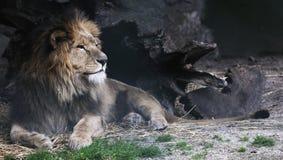 Duży kot Obrazy Royalty Free