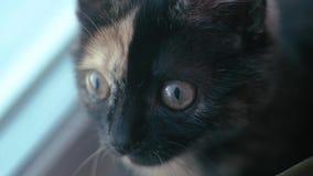 duży kot przygląda się śmiesznego Twarzy zbliżenie Makro- zbiory