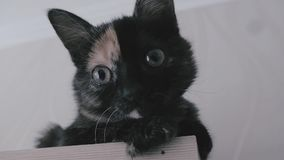 duży kot przygląda się śmiesznego Twarzy zbliżenie Makro- zdjęcie wideo