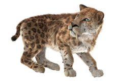 Duży kot Smilodon royalty ilustracja