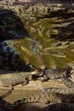 duży krokodyli udziału woda Obrazy Stock