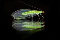 duży kropli zieleni liść makro- fotografii woda Zdjęcie Royalty Free