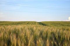Duży kukurydzany dywan obrazy royalty free