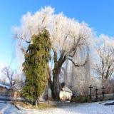 Duży Marznący drzewo na zima dniu Zdjęcia Royalty Free