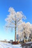 Duży Marznący drzewo na zima dniu Obrazy Stock