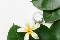 Duży mokry ficus opuszcza tropikalną kwiat świeczkę na białym tle Organicznie kosmetyka Wellness zdroju cia?a opieki poj?cie zdjęcie royalty free