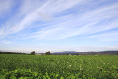Duży obszar trawiasty i niebo Zdjęcia Royalty Free