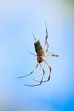 duży pająk Zdjęcie Royalty Free