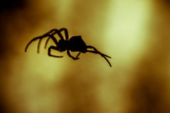 Duży pająk obraz royalty free