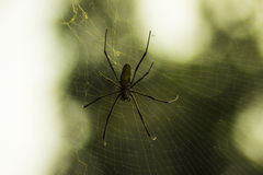 Duży pająk Fotografia Royalty Free