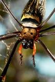 Duży pająk obraz stock