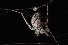 Duży pająk tworzy spiderweb na odosobnionym czarnym tle obrazy stock