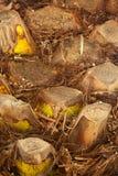 Duży palmowy bagażnik zdjęcie royalty free