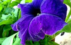 duży piękny kwiat Obraz Royalty Free