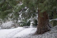 Duży piękny pinetree na boku ścieżka w lesie zdjęcia stock