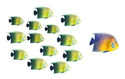 duży pojęcia ryba przywódctwo target1454_0_ Obrazy Stock