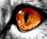 Duży pomarańczowy kota oko, zoom obraz royalty free