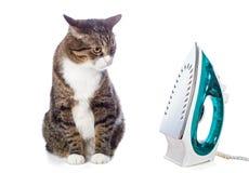 Duży popielaty kot i żelazo zdjęcia stock