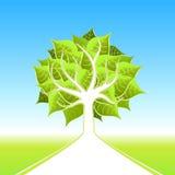 duży projekta eco drzewo Zdjęcie Royalty Free