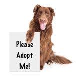 Duży Psi mienie Adoptuje Ja Szyldowy zdjęcie royalty free