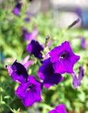 Duży purpura kwiat fotografia stock