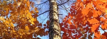 duży rozmiar panoramy jesienią Zdjęcie Stock