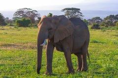 Duży słoń w sawannowym Kenja Amboseli Zdjęcia Royalty Free