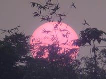 Duży słońce obrazy royalty free