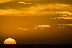 duży słońce Obraz Royalty Free