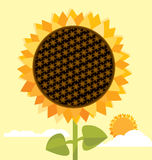 duży słonecznik Zdjęcie Royalty Free