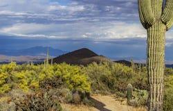 Duży Saguaro kaktus W przedpolu z górami w tle fotografia royalty free