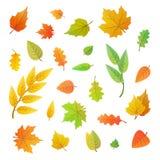 Duży set śliczni liście od różnych drzew na bielu Obraz Stock