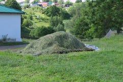 Duży stos siano który suszy w słońcu zdjęcie stock