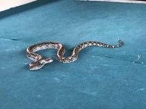 Duży wąż Zdjęcie Stock