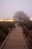 duży wieczór mgłowy sur Zdjęcie Stock