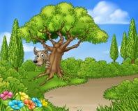 Duży Zły Wilczy zerkanie Od drzewa Zdjęcia Stock