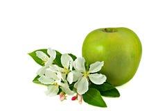 Duży zielony jabłko z małą wiązką jabłoniowi kwiaty Zdjęcia Stock