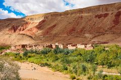 Du beau roses DES de Rose Valley - de Vallee, pr?s d'Ouarzazate, le Maroc photographie stock libre de droits