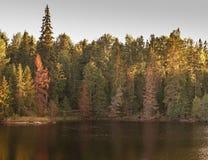 Du bois d'automne est reflété en rivière Image libre de droits