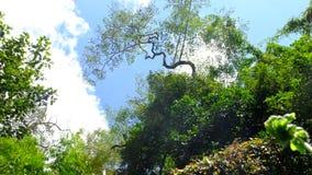 Du Cambodge Mondulkiri de province intérêt très pour des touris Image stock