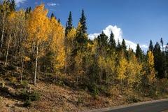 Or du Colorado Photos libres de droits