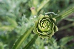 Du cru frais, fruits et légumes sains organiques de ferme au franc Photos libres de droits