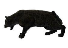 Dużego kota Czarna pantera Obraz Stock